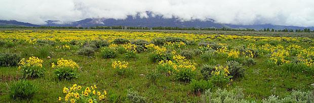 Photo: Jackson Hole Meadow
